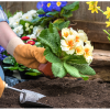 Sowing Seeds In Flower Garden